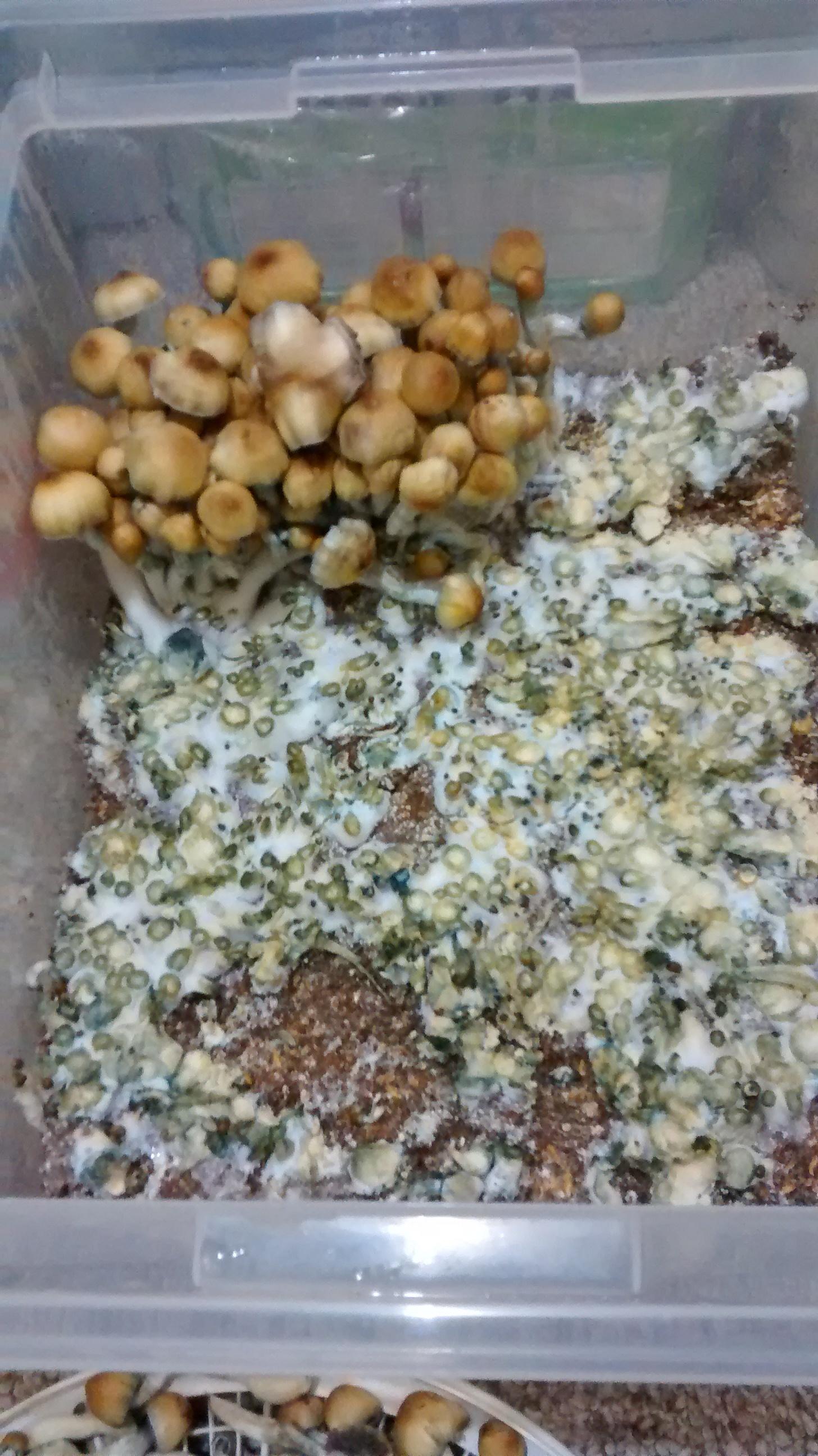 Using Michigan Peat Garden Magic Compost and Manure for bulk