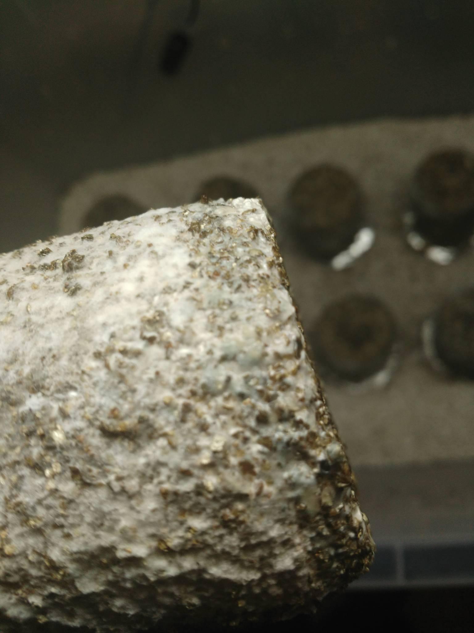 Foil VS  Lids / CBK's bottom watering tek - Mushroom Cultivation
