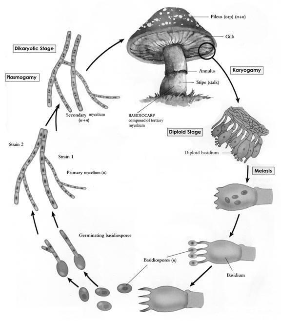 Principles Of Mushroom Growing For Beginners
