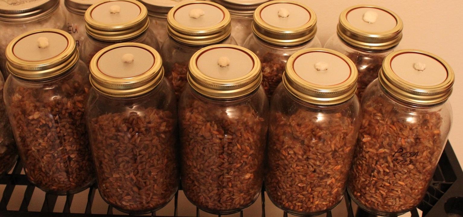 BOD's Easy AF OAT prep tek  - Mushroom Cultivation