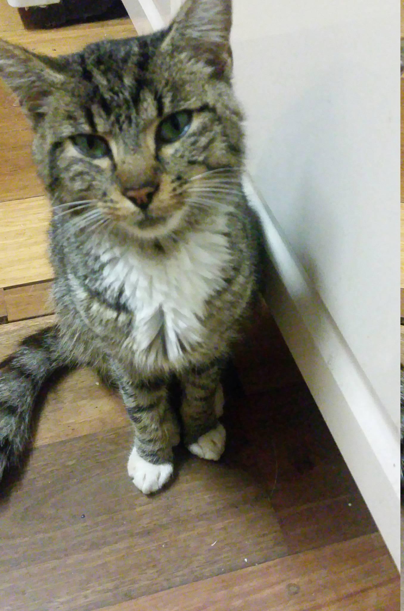 Ward End Cat Rescue