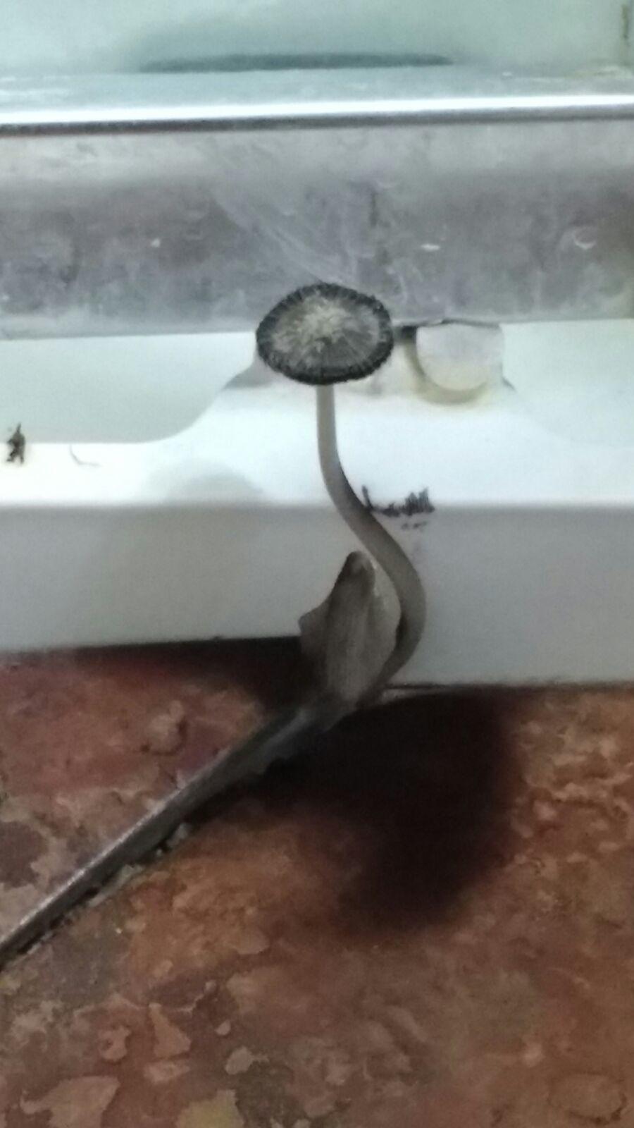 Bathroom Mushroom Id Mushroom Hunting And Identification