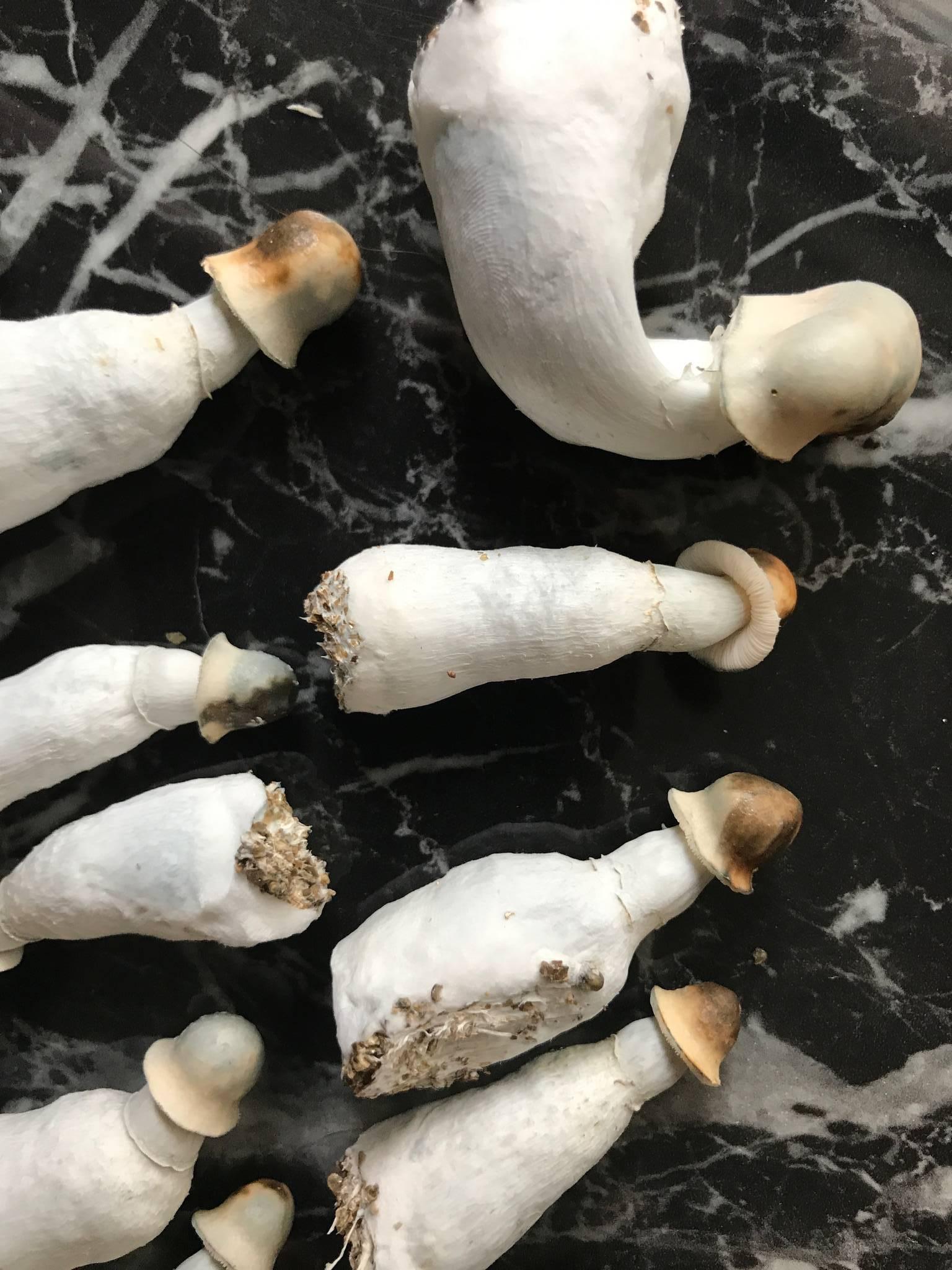 Are these contaminated? - Contamination Forum - Shroomery
