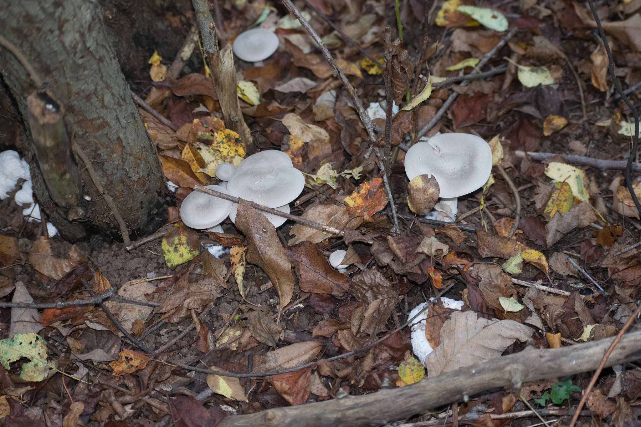Post Your Hunting Picture of The Day (No ID Requests) - Mushroom