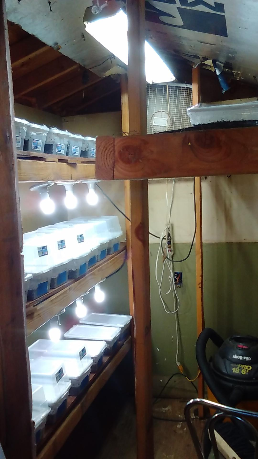 One bad shoebox & Unmod tubs!!! - Mushroom Cultivation
