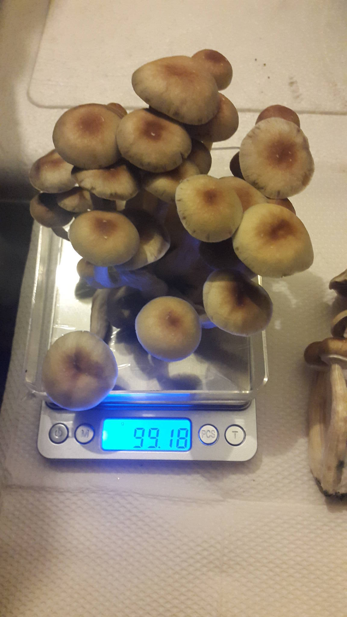 Easiest Liquid Culture for the incredibly lazy - Mushroom
