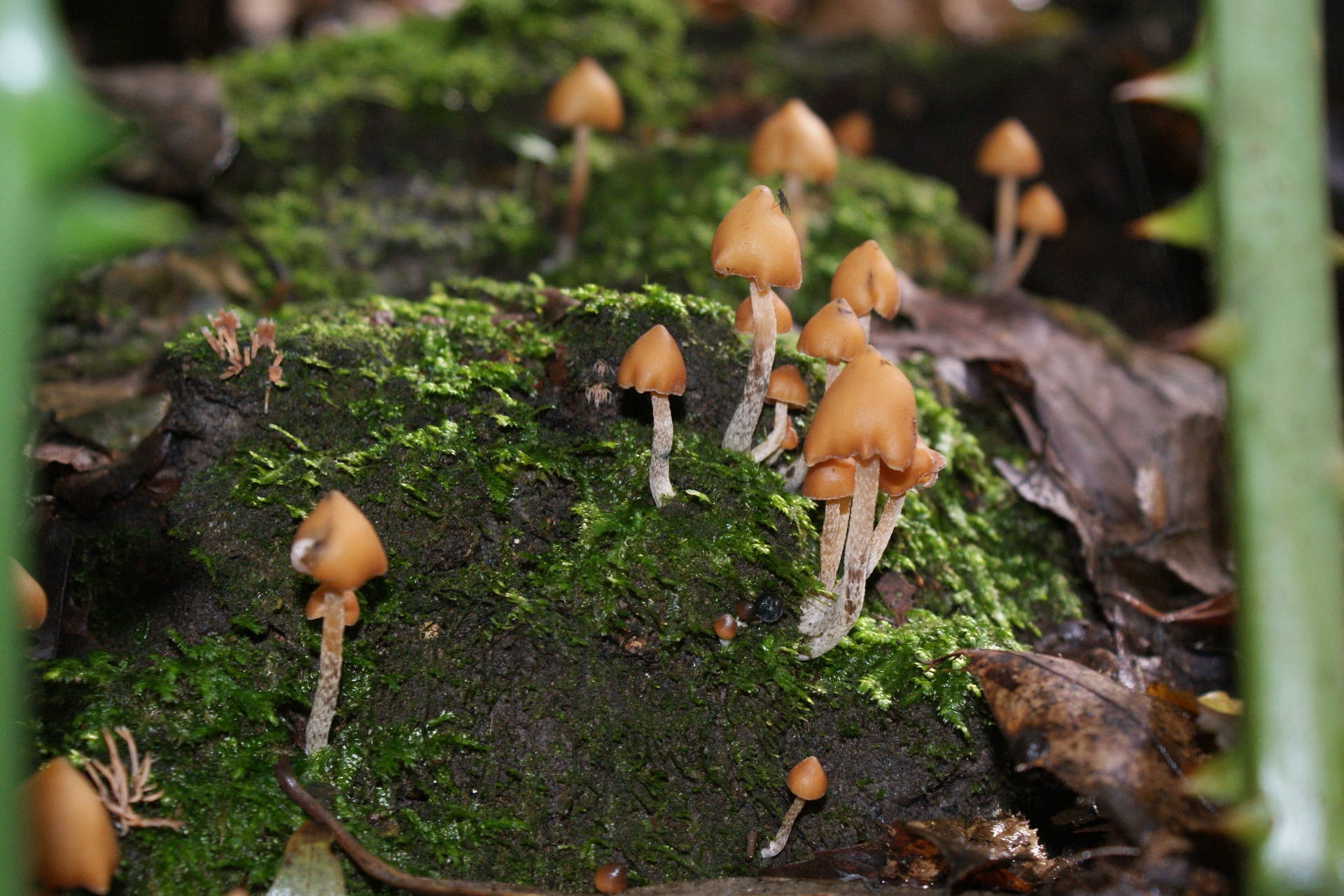 Today's exotic actives foray - Mushroom Hunting and
