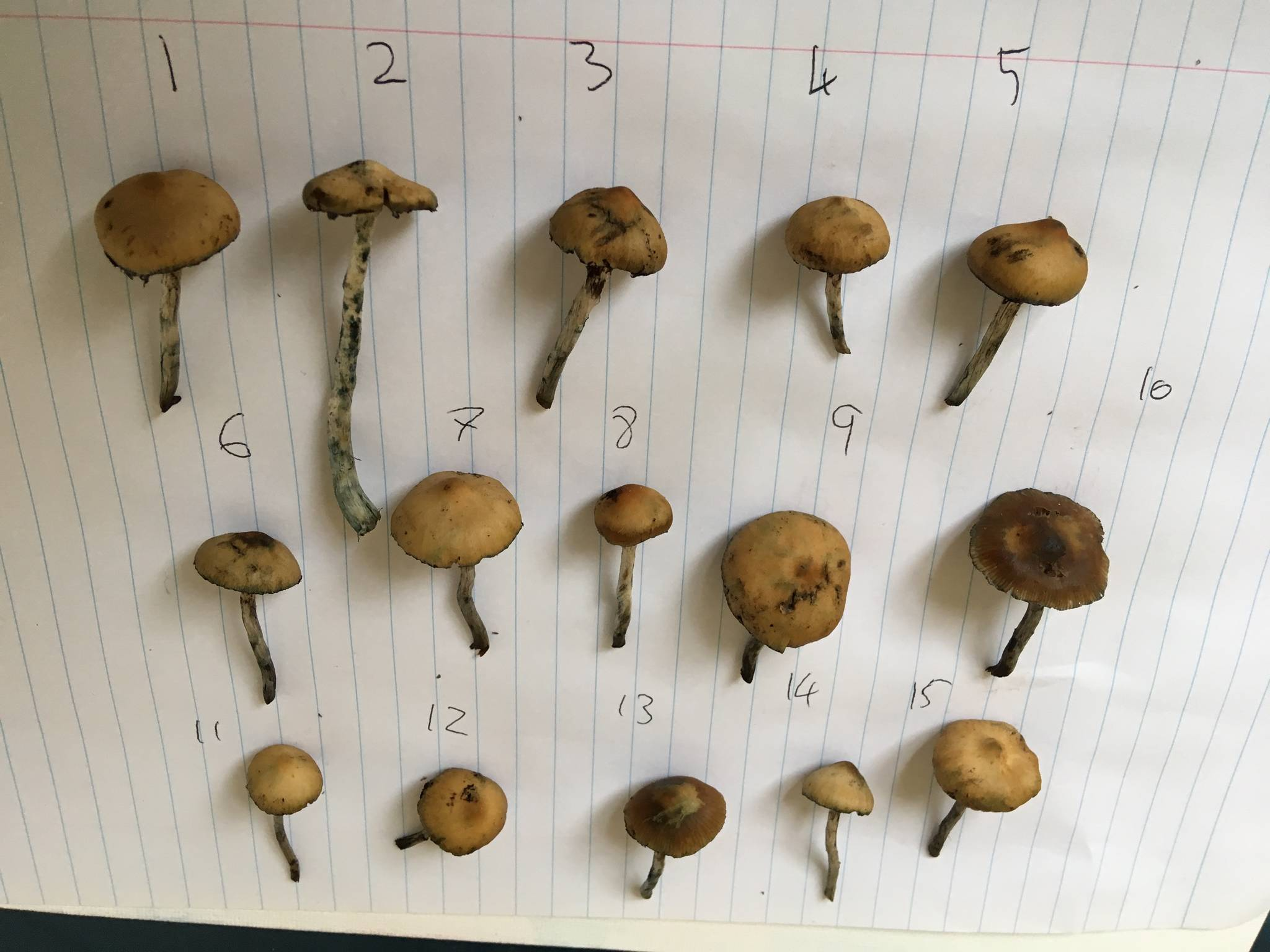 subs id second opinion please canberra - Mushroom Hunting and