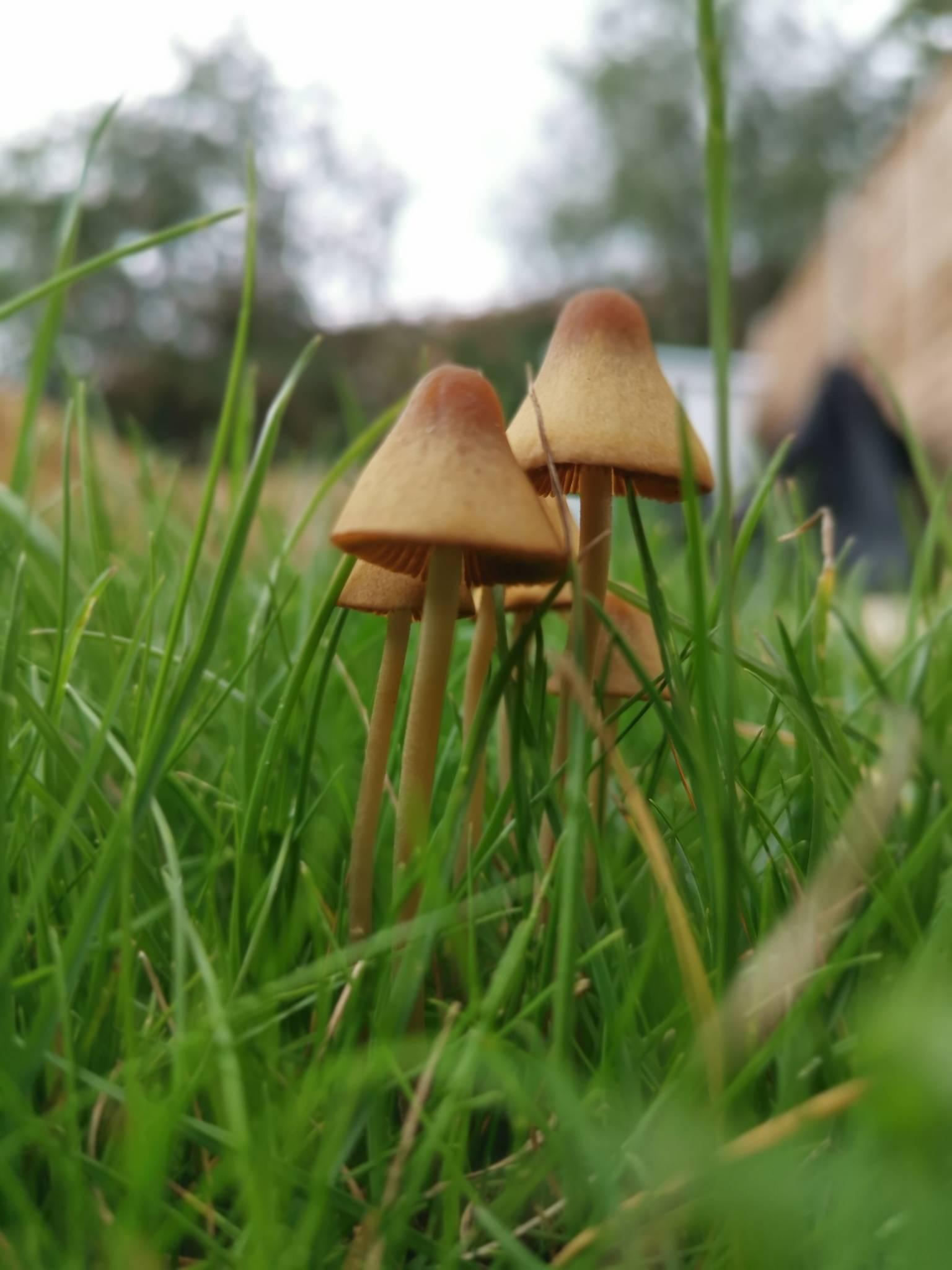 Newbie ID - Mushroom Hunting and Identification - Shroomery
